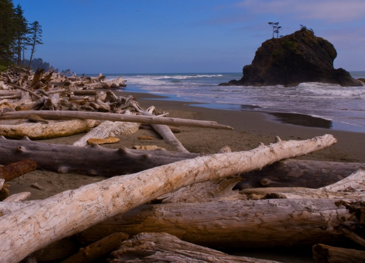 wa-beach-logs-2