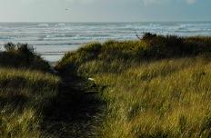 beach-grass-1