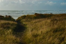 beach-grass-2