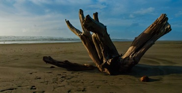 beach-stump-1