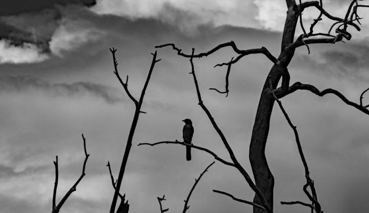 Bird sky wp