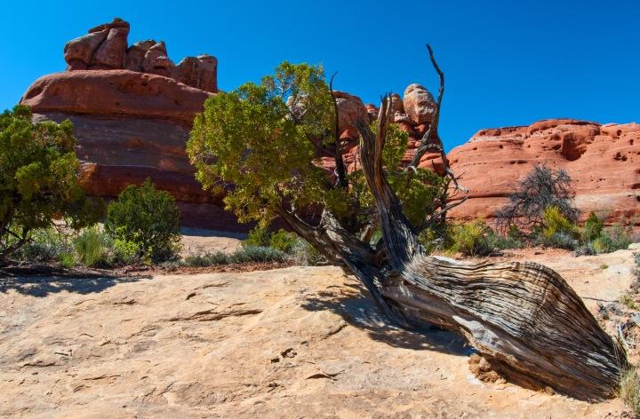 Cedar rocks