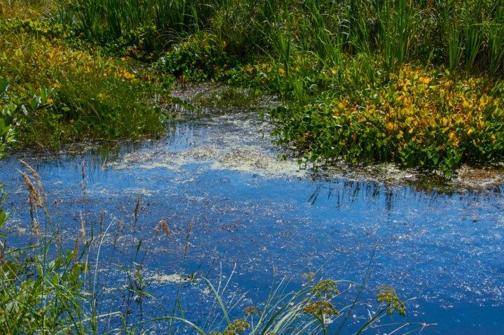 Marsh 1wp