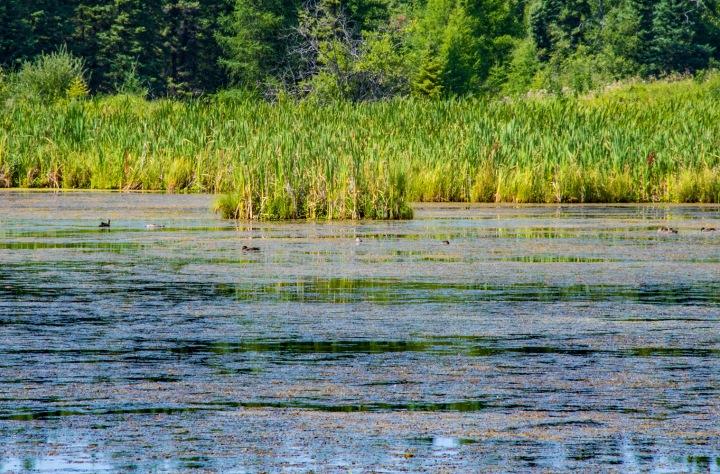 Marsh pond 3wp