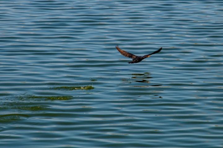 Waterfowl 1wp