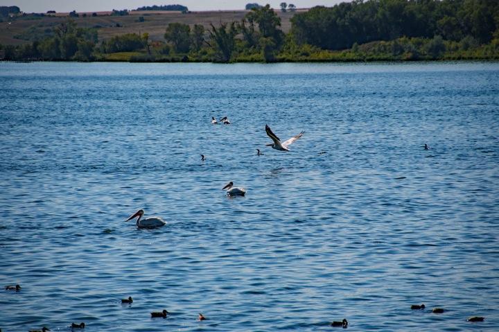 Waterfowl 2 wp