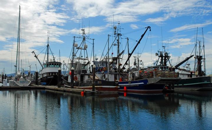 Bellingham Harbor 1 wp