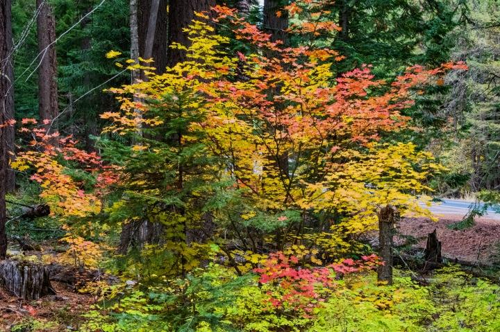 Fall Colors 2 wp