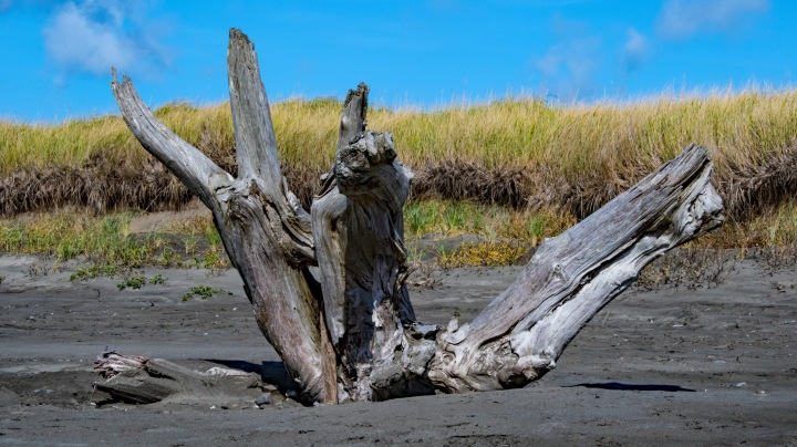 Driftwood Shape wp
