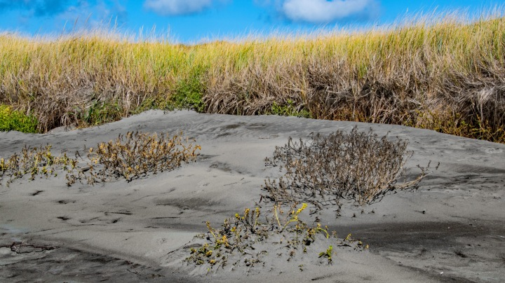 Grass and Sand wp