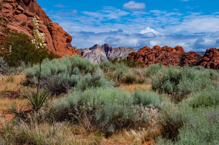 Canyon Vista 2