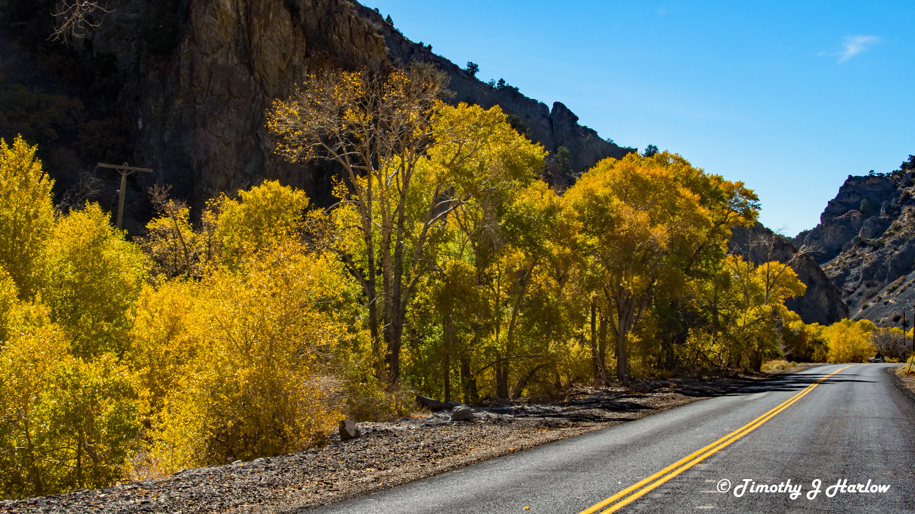 Fall Foliage - Ophir Canyon wp